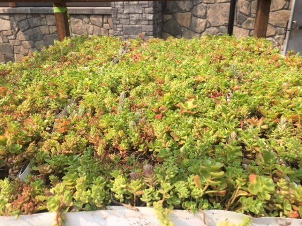 Malcolm Plants 2